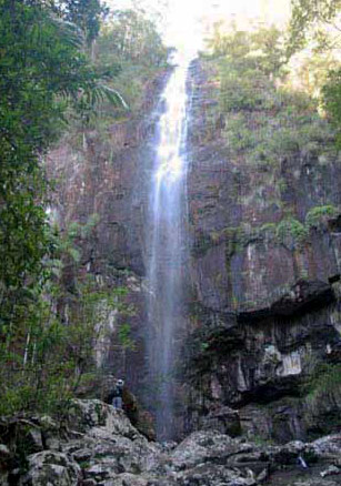 Verdant rainforest around waterfall near Lismore.