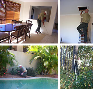 Home Termite Inspection of house, gardens and roof void