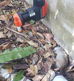 Rodent Control Services For Homes And Businesses In